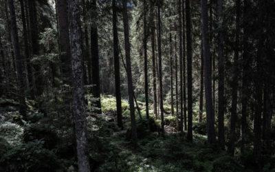 #2 Was wir von Bäumen lernen können